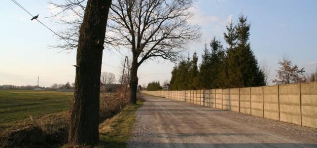 Czy zamiast dębów na ul. Siedleckiej będą rosły drzewa ozdobne?