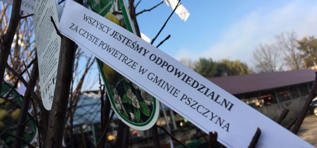 Drzewka rozdawane przez burmistrza Pszczyny podczas antysmogowego strajku młodzieży 14 listopada 2019 r. /  fot. UM Pszczyna