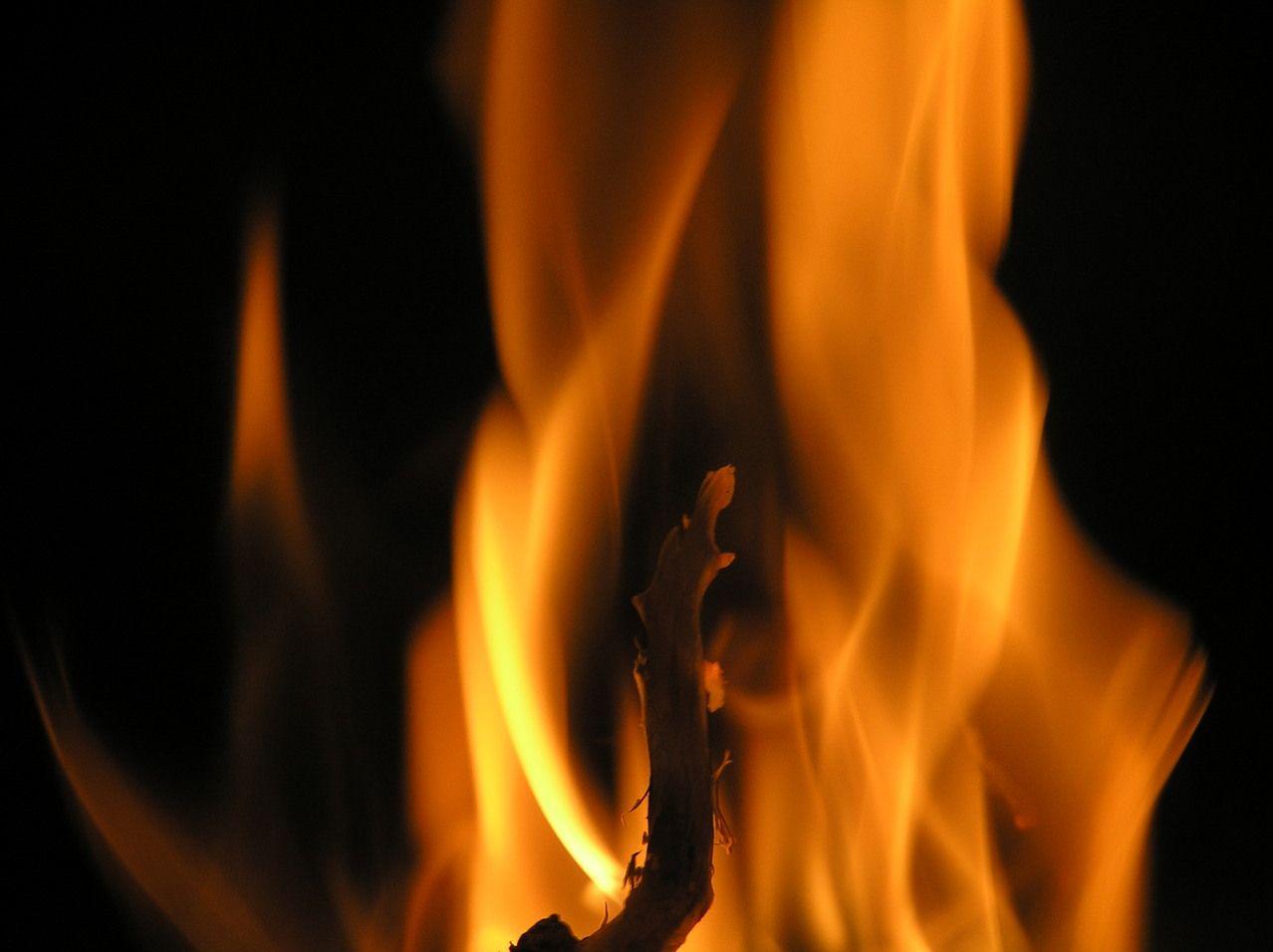 Kobielice: spłonęły tuje przy szkole