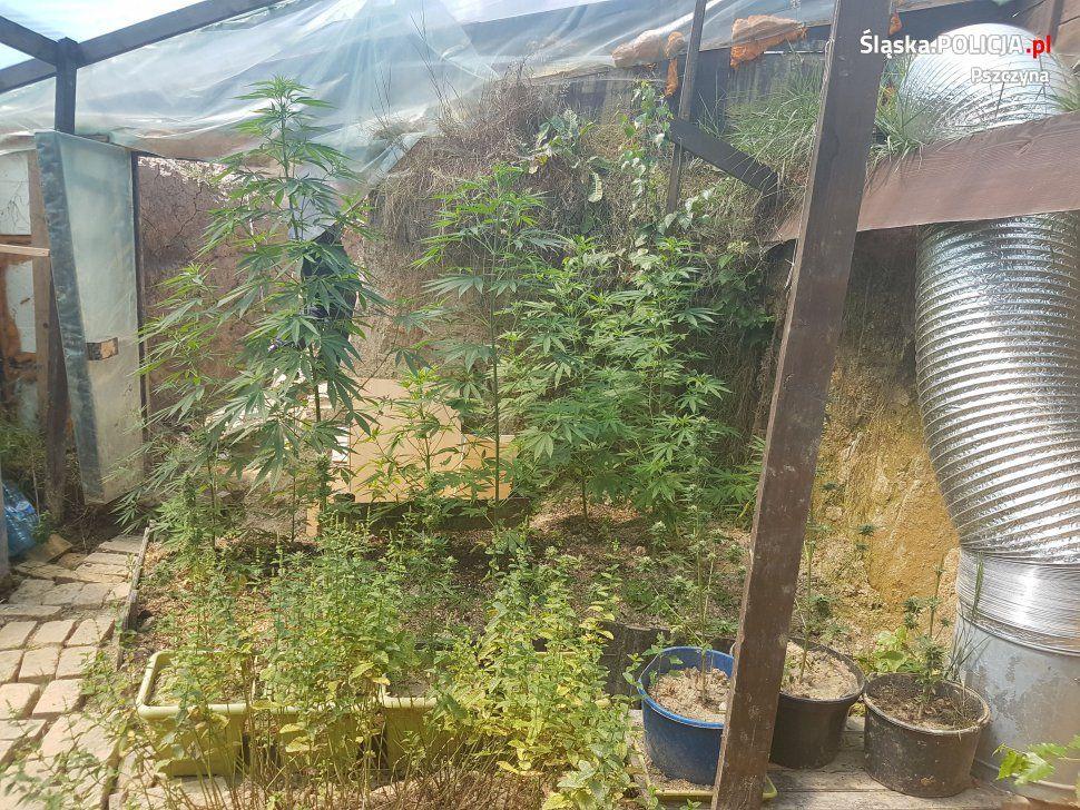 Pawłowice: akt oskarżenia za przydomową plantację marihuany