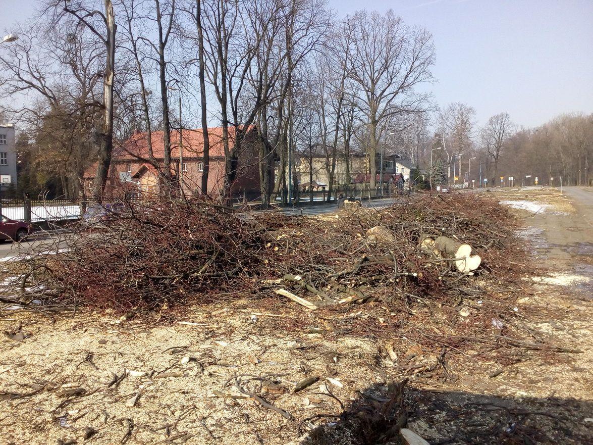 Centrum przesiadkowe: drzewa wycięte, ogłoszono przetarg
