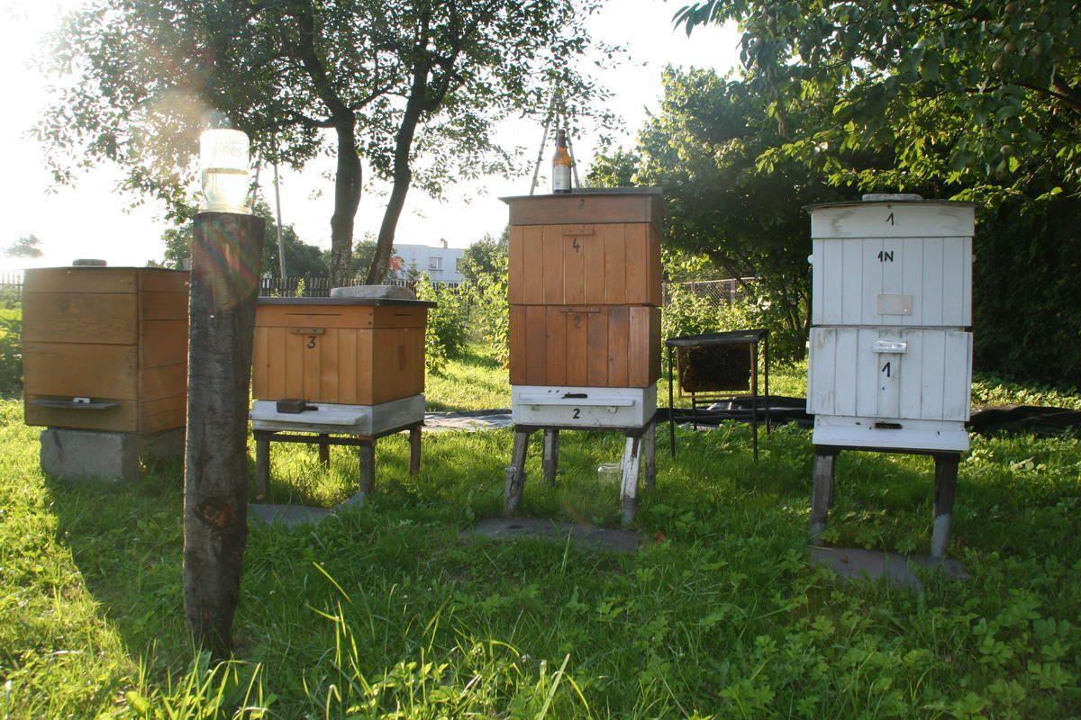 Trudne życie pszczół
