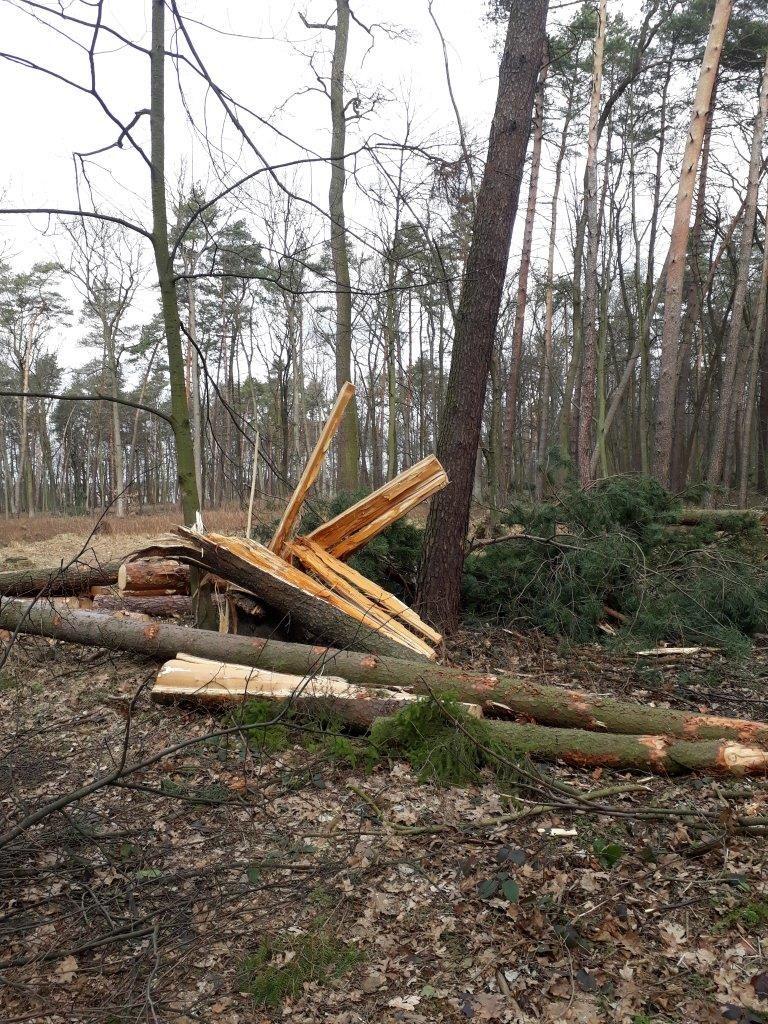Zniszczenia po wichurze: bądźmy ostrożni w lesie!