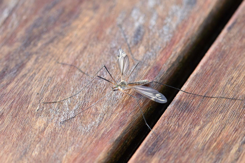 Gmina Miedźna pozbędzie się komarów