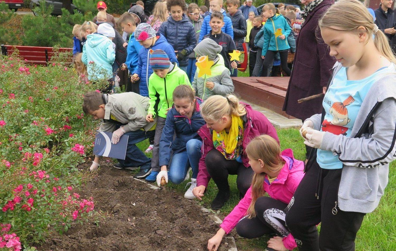 Pola Nadziei zakwitną wiosną w Warszowicach