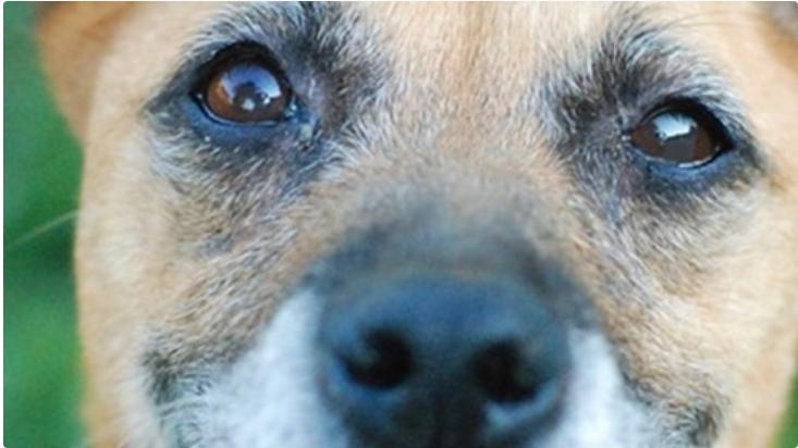 Trwa mikołajkowa zrzutka Fundacji Zwierzęca Arkadia na bezdomne zwierzęta