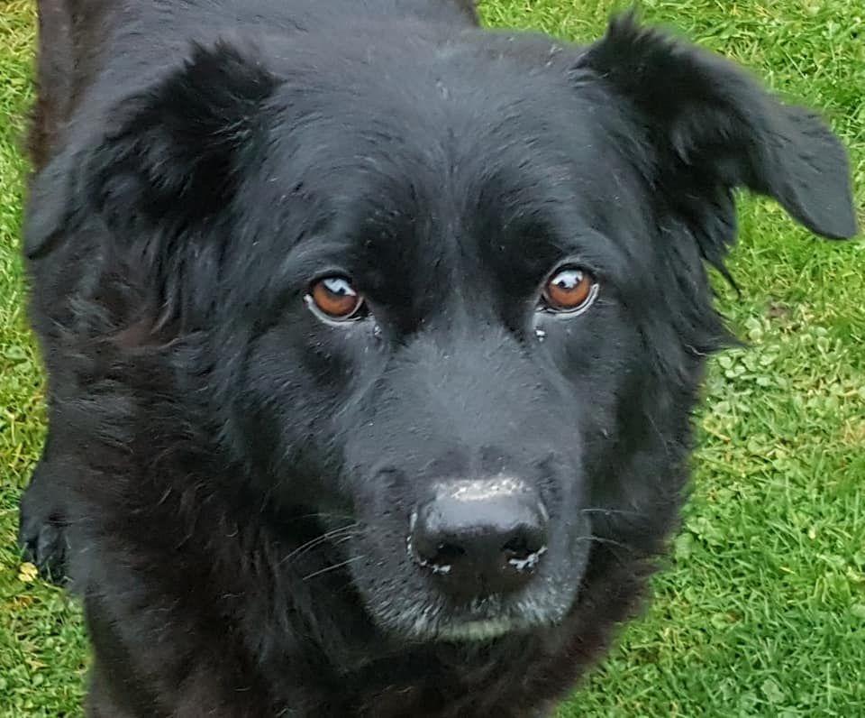 Zastrzelono psa w Wiśle Wielkiej. Poszukiwani świadkowie