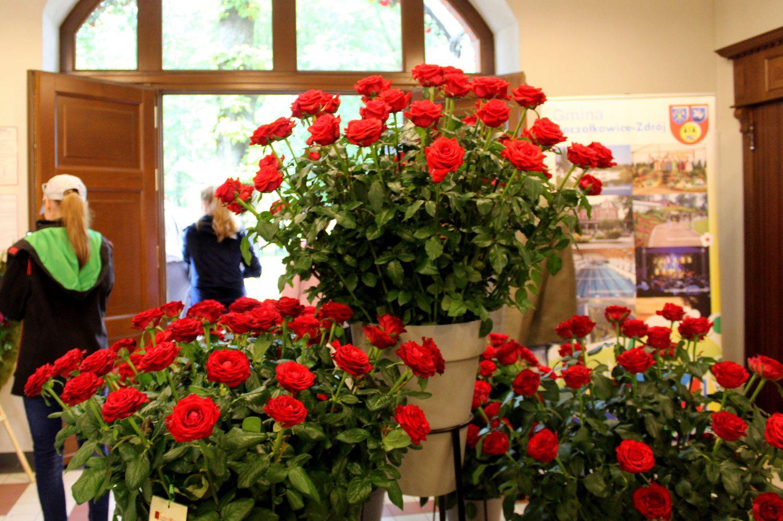 Odwołano Festiwal Róż i Dni Goczałkowic