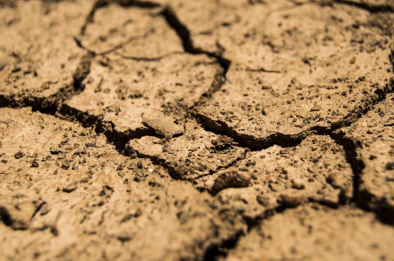 ARiMR zakończyła pierwszy etap wypłat pomocy suszowej