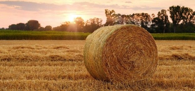 Milion wniosków od rolników już w ARiMR