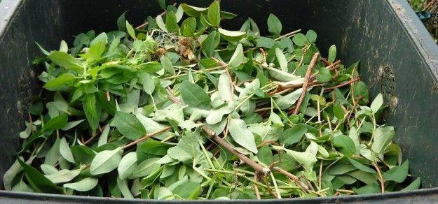 Mieszkańcy Pszczyny otrzymają pojemniki na bioodpady