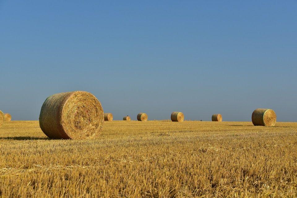 300 tys. zł na odtworzenie potencjału gospodarstwa