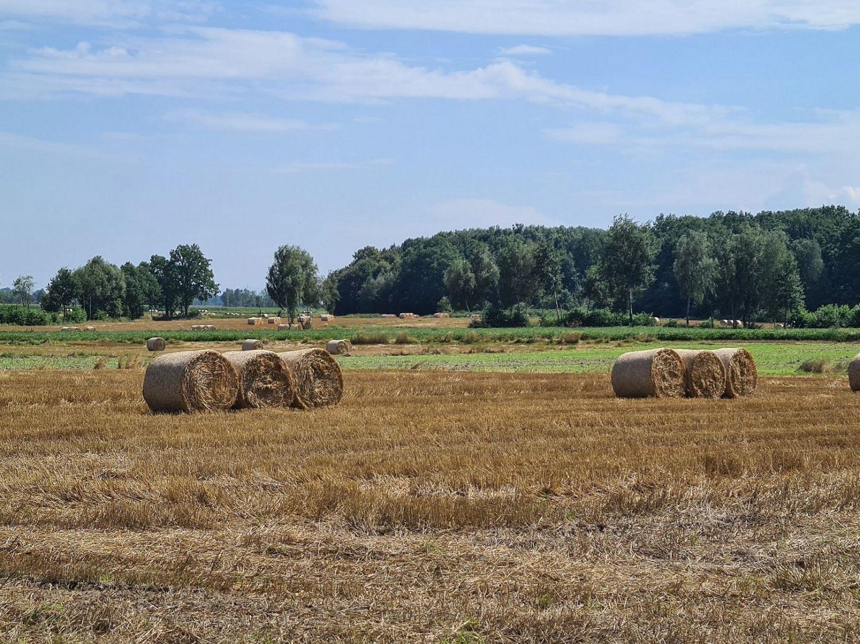 Wsparcie dla rolników poszkodowanych przez COVID-19