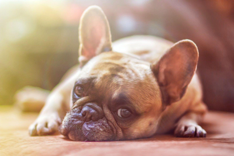 Zadbaj o bezpieczeństwo swojego psa