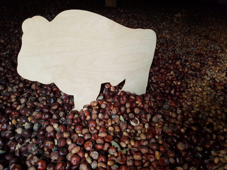 Zebrano ponad 13 ton żołędzi i kasztanów!