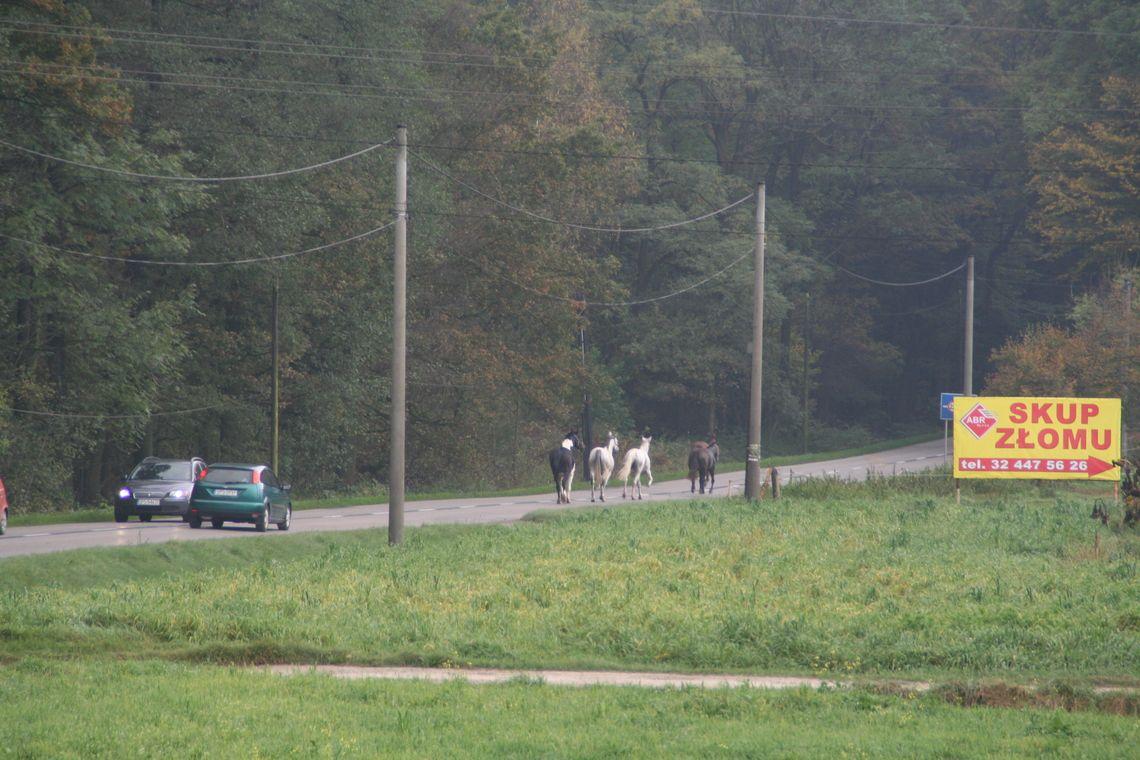 Konie uciekły z zagrody. Ruszyły drogą w kierunku Poręby