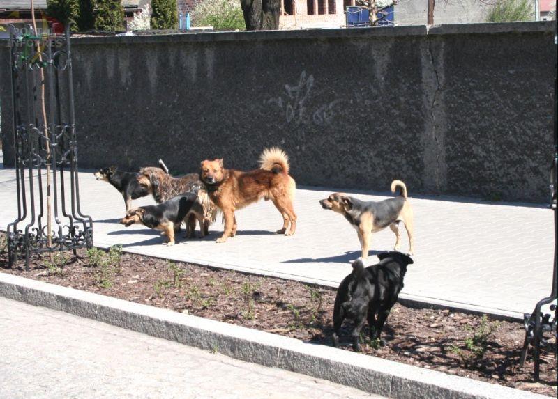 Psy w natarciu