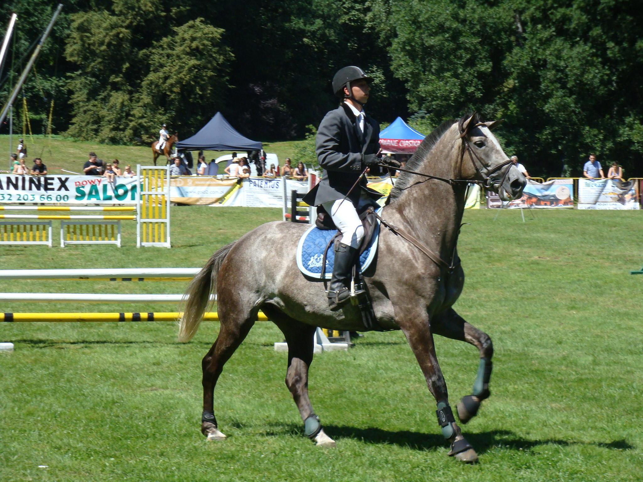 Zawody jeździeckie w skokach przez przeszkody [FOTO]
